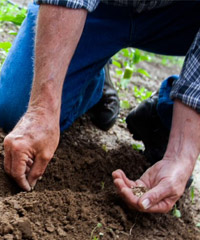 Planting seeds by hand